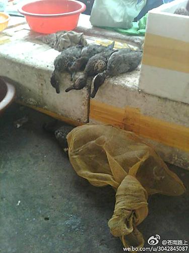 龙港海城菜场贩卖野生动物