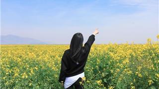 龙港新城千亩油菜花悄然盛开!附观赏地址
