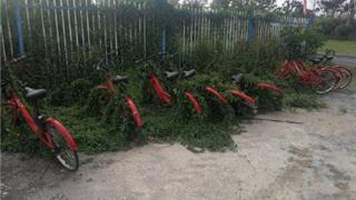 龙港的共享单车快要被草吃掉了