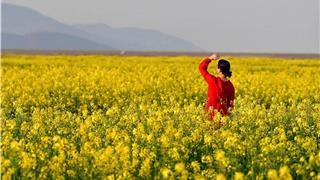 欣赏 | 一大波赏花美照流出,新城千亩花海等你来!